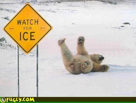 """Jääkarhu kellahtaa jäätiköllä selälleen. Edustalla näkyy kyltti, jossa lukee """"Watch for ice""""."""