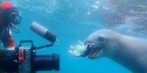 Kameramies, merileopardi ja pingviininraato