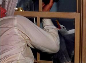 Lokki hyökkää Mitchin ovenkahvaa tavoittelevan käden kimppuun