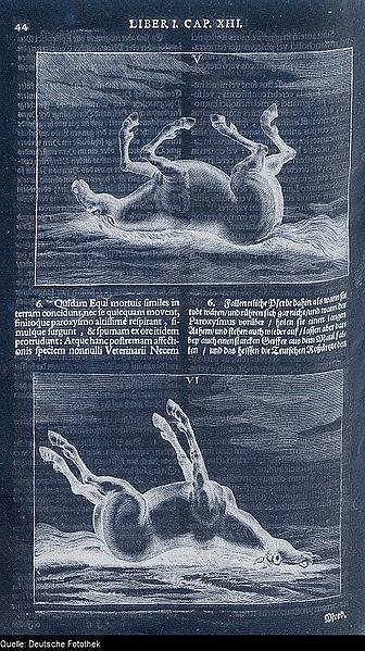 Sivu saksalaisesta eläinlääketieteellisestä kirjasta: kaksi piirroskuvaa kuolleesta hevosesta (negatiivi)