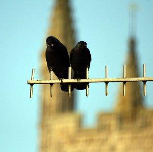 Edustalla kaksi naakkaa antennilla, taustalla häämöttää kaksi (kirkon?)tornia
