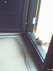 Orava seisoo parvekkeen oven kynnyksellä
